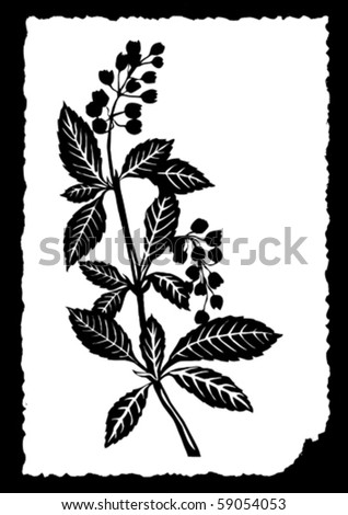 vector drawing of the plant on white paper - stock vector
