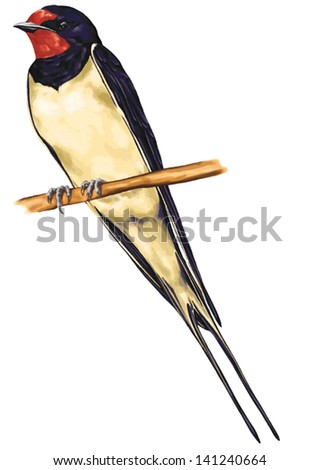 vector drawing of wild common bird species, Barn Swallow, Hirundo rustica, species of swallow, a distinctive passerine bird with blue upperparts, a long, deeply forked tail and curved, pointed wings - stock vector