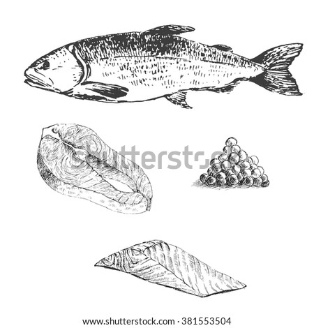 Vector engraving illustration of highly detailed hand drawn trout isolated on white background - stock vector
