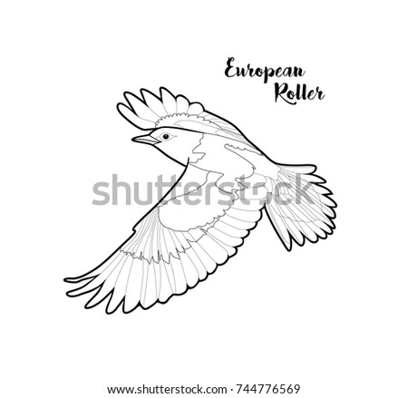 Vector European Roller Bird Coloring Page Isolated Compounding Graphic