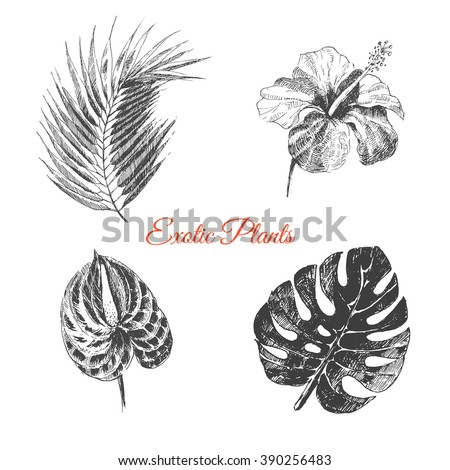 Line Drawn Tropical Flower Stock Images, Royalty-Free Images ...