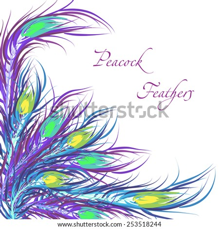 Vector feathers peacock with color background. Fashionable design eps10. - stock vector