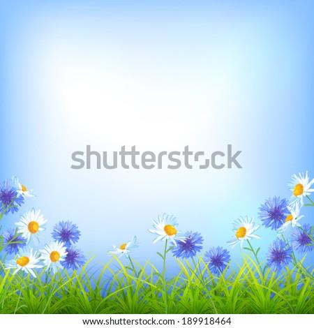 Vector field flowers (daisy, cornflower), blue sky, green grass summer day natural background - stock vector