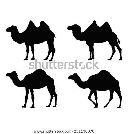 vector file of camel silhouette - stock vector