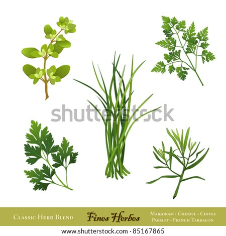 vector - Fines Herbes. Traditional French herb blend for cooking: Sweet Marjoram, Chives, Chervil, Italian Flat Leaf Parsley, French Tarragon isolated on white. EPS8 compatible. - stock vector