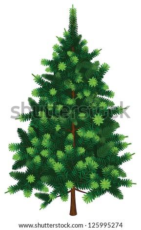 Vector Fir Tree - stock vector