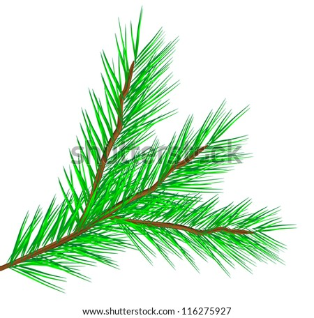 Vector fir tree branch isolated on a white background