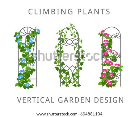 Trellis Stock Images Royalty Free Images Amp Vectors