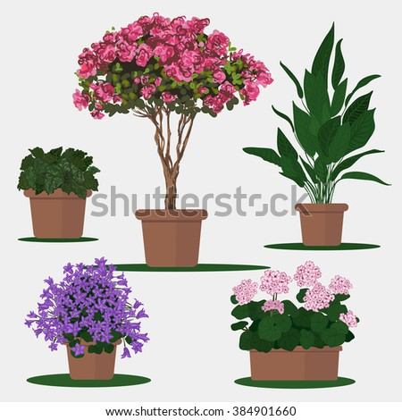 Vector flat illustration of plants in pots.