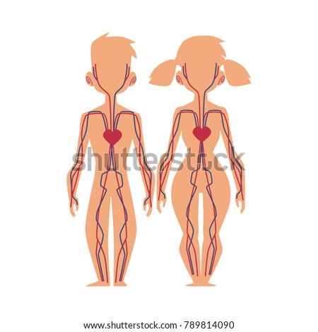 Vector Flat Structure Human Body Anatomy Stock Vector 789814090 ...
