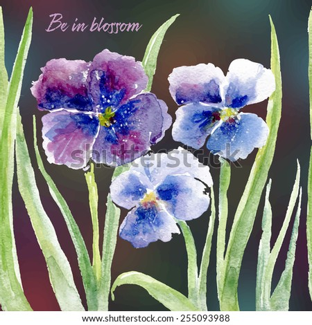 Vector floral illustration for different occasions. Cute summer and spring card. Pansy flowers on the black blurred background. Viola tricolor - stock vector