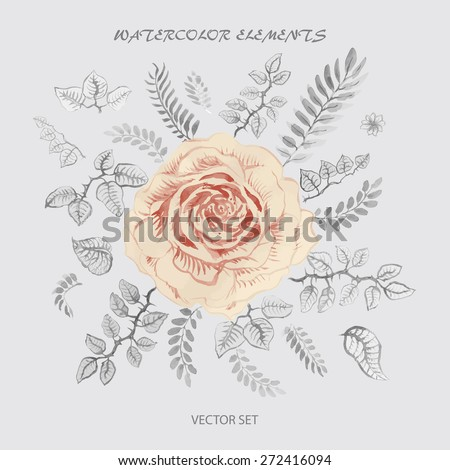 Vector floral set from watercolor painted garden flowers silhouette, beautiful beige rose, delicate colorless leaves on a light grey background - stock vector