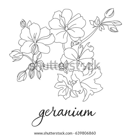 vector flower geranium silhouette spring hand lettering