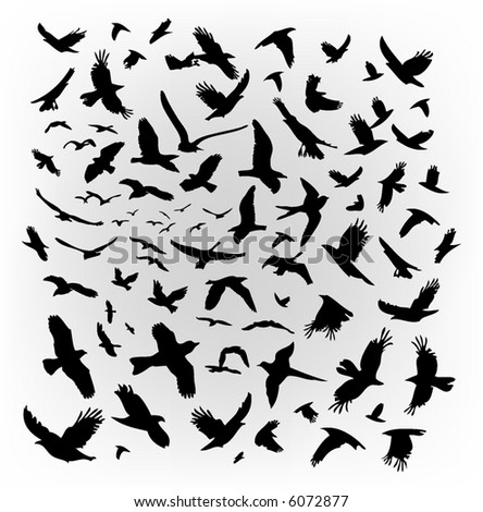 vector flying birds - stock vector