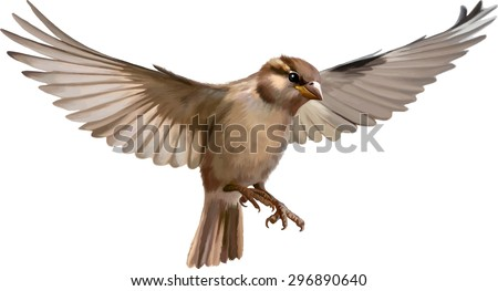 Flying sparrow animated - photo#23