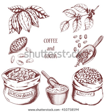 Vector food set with cocoa and coffee elements. Hand drawn bags of coffee beans and cocoa beans, cocoa powder, branch of coffee and branch of cocoa in sketch style. For coffee house, restaurant menu. - stock vector