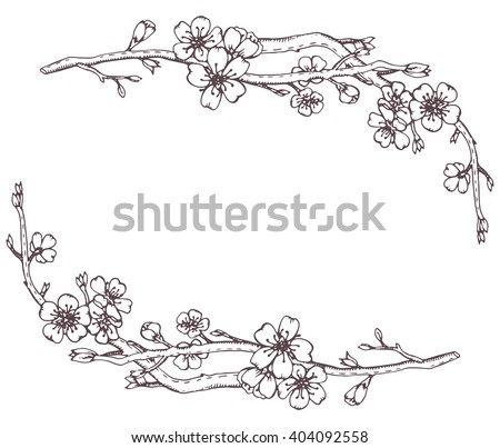 Vector frame with hand drawn graphic branches of a blossoming cherry tree (sakura) - stock vector