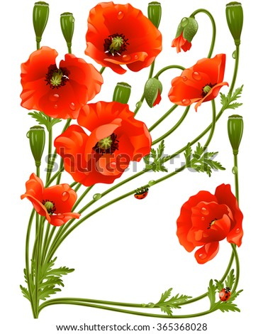 Vector frame with red poppies and ladybug - stock vector