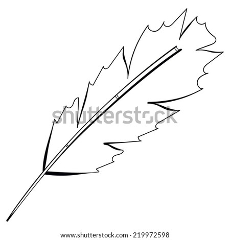 Vector freehand drawing black bird feather isolated on white background. Fully editable element design sketch pen. - stock vector