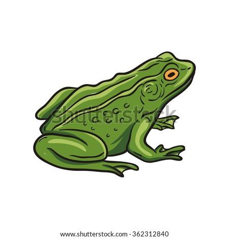 Vector Frog - stock vector