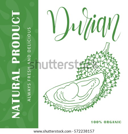 Vector fruit element of durian. Hand drawn icon with lettering. Food illustration for cafe, market, menu design