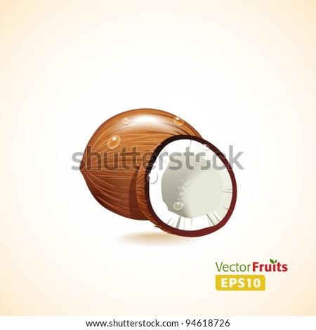 Vector fruits illustration. Coconut - stock vector