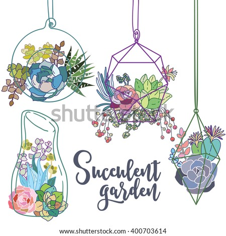 Vector glass terrariums with succulents set - stock vector