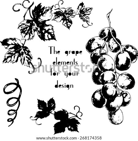 Vector grapes element with hand drawn art for your design