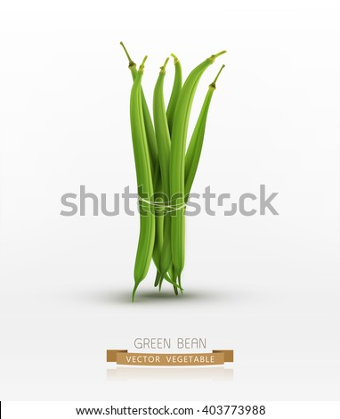 vector green beans bound sheaf isolated on white background - stock vector
