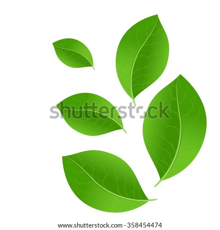 Vector green leaves - stock vector