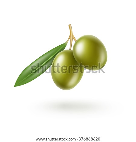 Vector Green Olives Branch with Leaves Isolated on White Background - stock vector