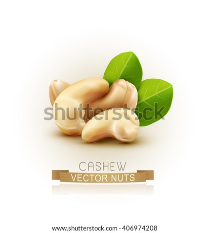 Vector group of cashew nuts isolated on white background
