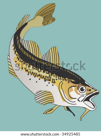 vector haddock fish