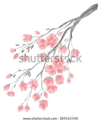 vector hand drawing - branch of sakura cherry blossoms with delicate pink flowers on white background - stock vector