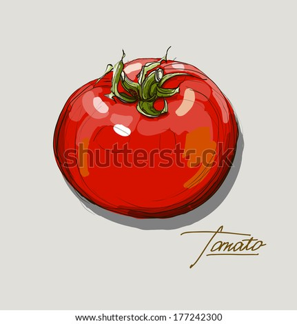 vector hand drawing red tomatoes - stock vector