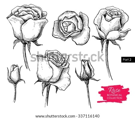 Vector hand drawn botanical rose set. Engraved collection. Great for greeting cards, backgrounds, wedding invitations - stock vector