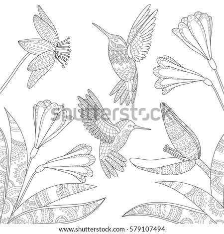 colibry stock images royalty free images amp vectors