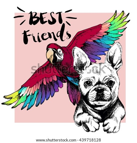 Vector hand drawn concept of french bulldog and ara macaw friendship. Color hand drawn domestic dog and wild exotic parrot illustration. Decorated with square border. Best friends.  - stock vector