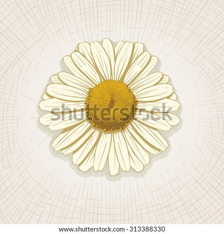 Vector hand drawn daisy flower. Global color CMYK.  - stock vector
