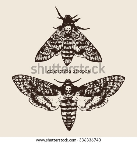 Vector hand drawn Deaths head hawk moths illustration. Signature is the Latin name of the species - stock vector