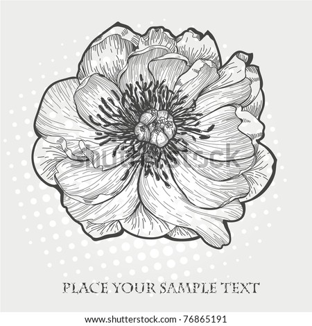 vector hand drawn  illustration of a single peony - stock vector