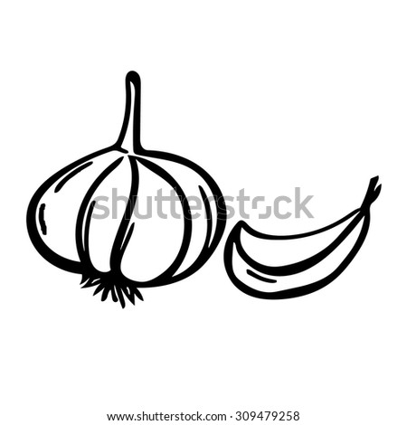 Vector hand drawn illustration with spice garlics isolated on white background - stock vector