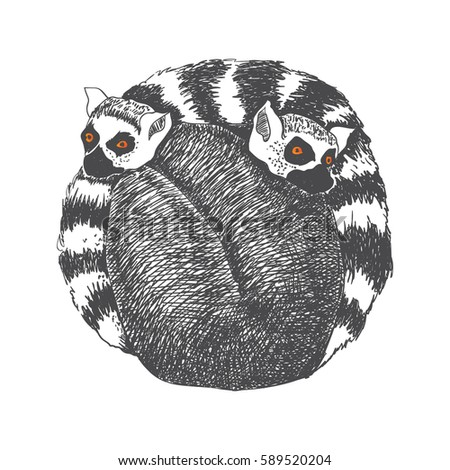 Vector hand drawn pair of lemurs. Graphic black and white illustration.Rough sketch of jungle animals.