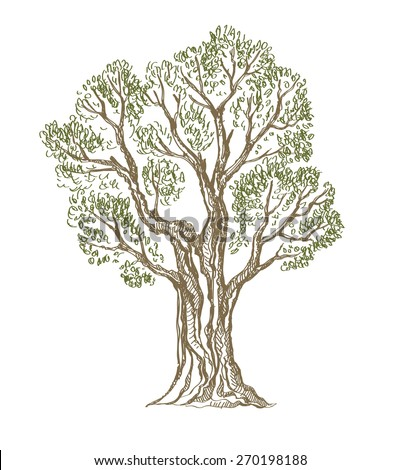 vector hand drawn picture of Tree on background