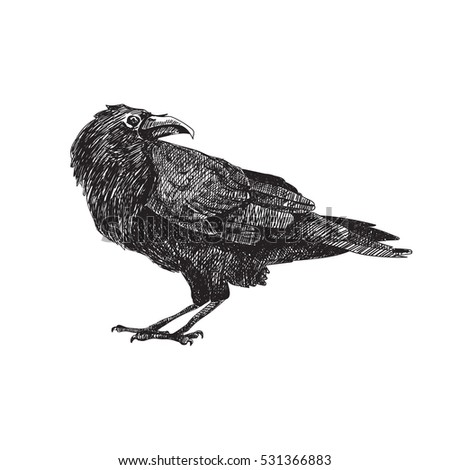 Crow Bird Stock Images Royalty Free Images Amp Vectors