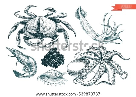 vector hand drawn set of seafood icons crab shrimp squid octopus