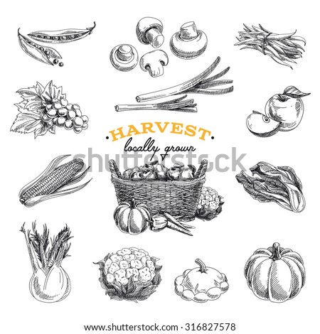 Vector hand drawn sketch Harvest set. Eco foods.Vector illustration. - stock vector
