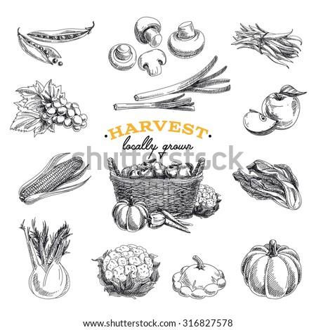 Vector hand drawn sketch Harvest set. Eco foods.Vector illustration. - stock vector