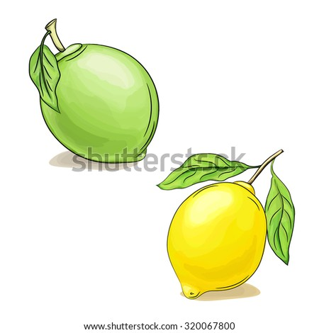 Vector hand drawn sketch illustration of lime and lemon with leaves isolated on white. EPS 10. Ideal for food packaging design - stock vector