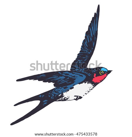 swift bird stock images royalty free images amp vectors